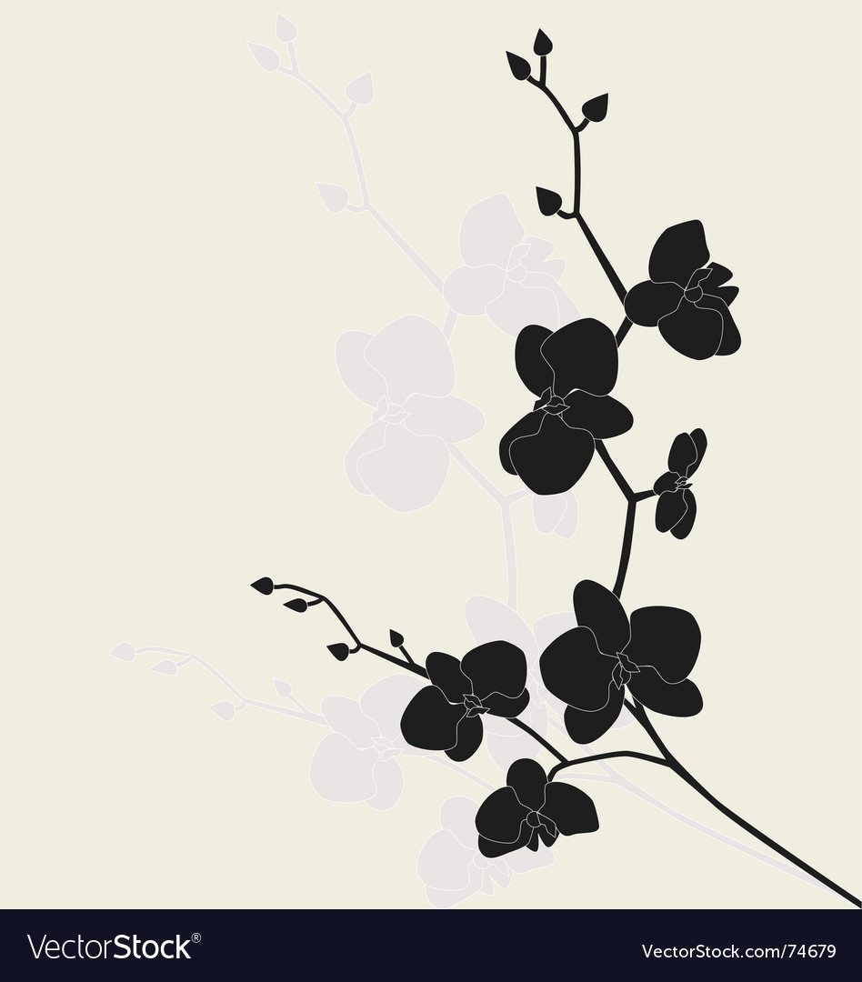 Stylized orchid branch vector image