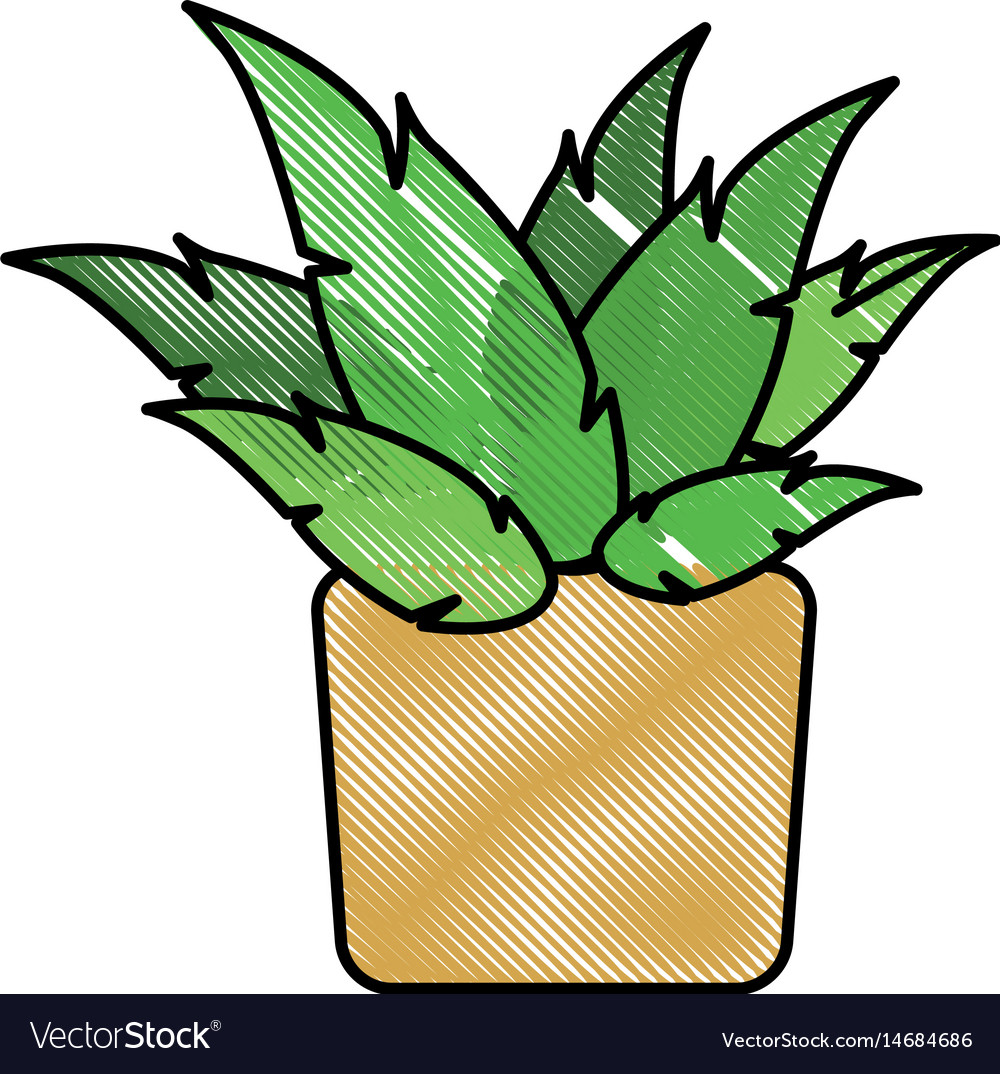 Drawing pot plant decoration botanic natural vector image