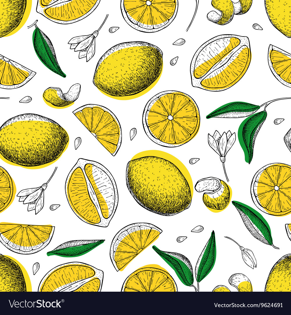 Lemon seamless pattern Drawing lemon vector image