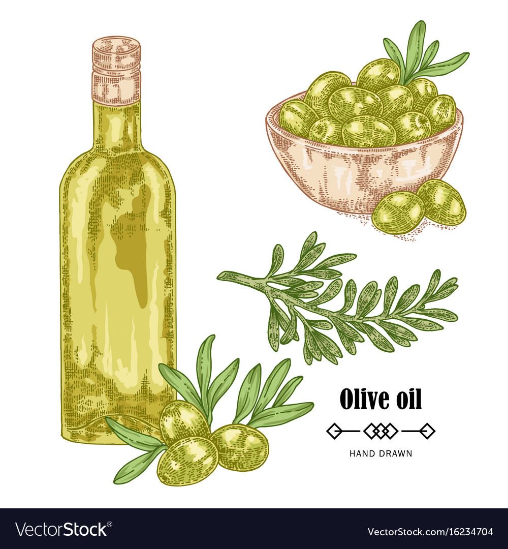 Hand drawn olive branch and olive oil in glass vector image