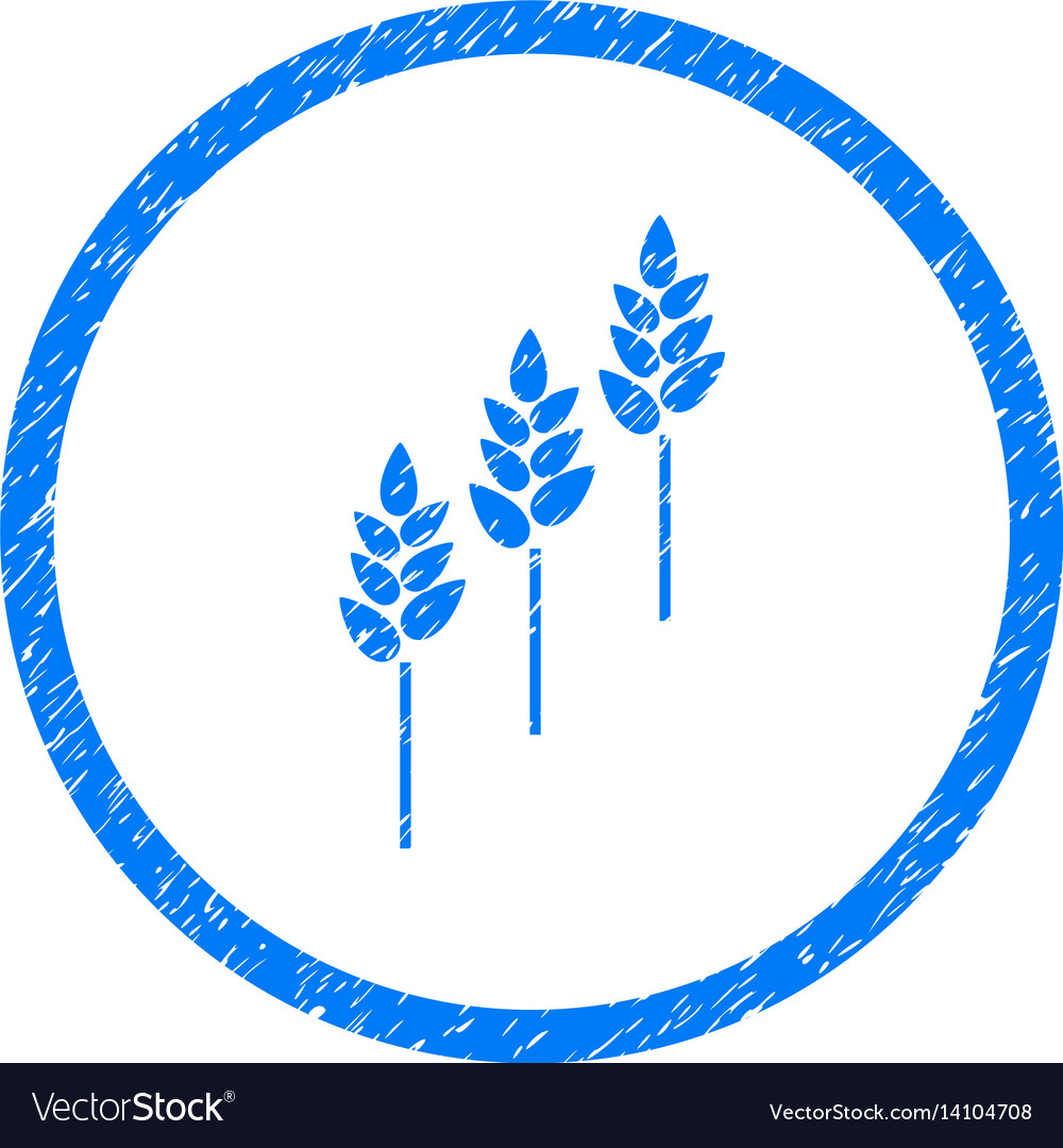 Wheat plants rounded grainy icon vector image