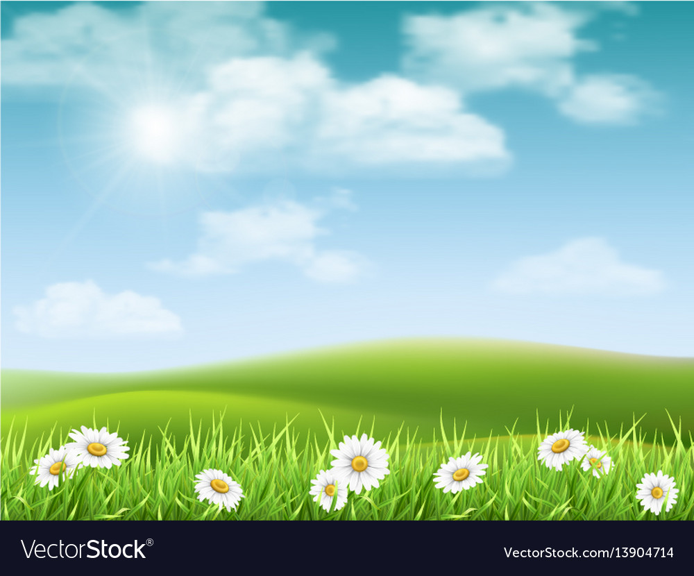 Landscape with chamomile hills vector image