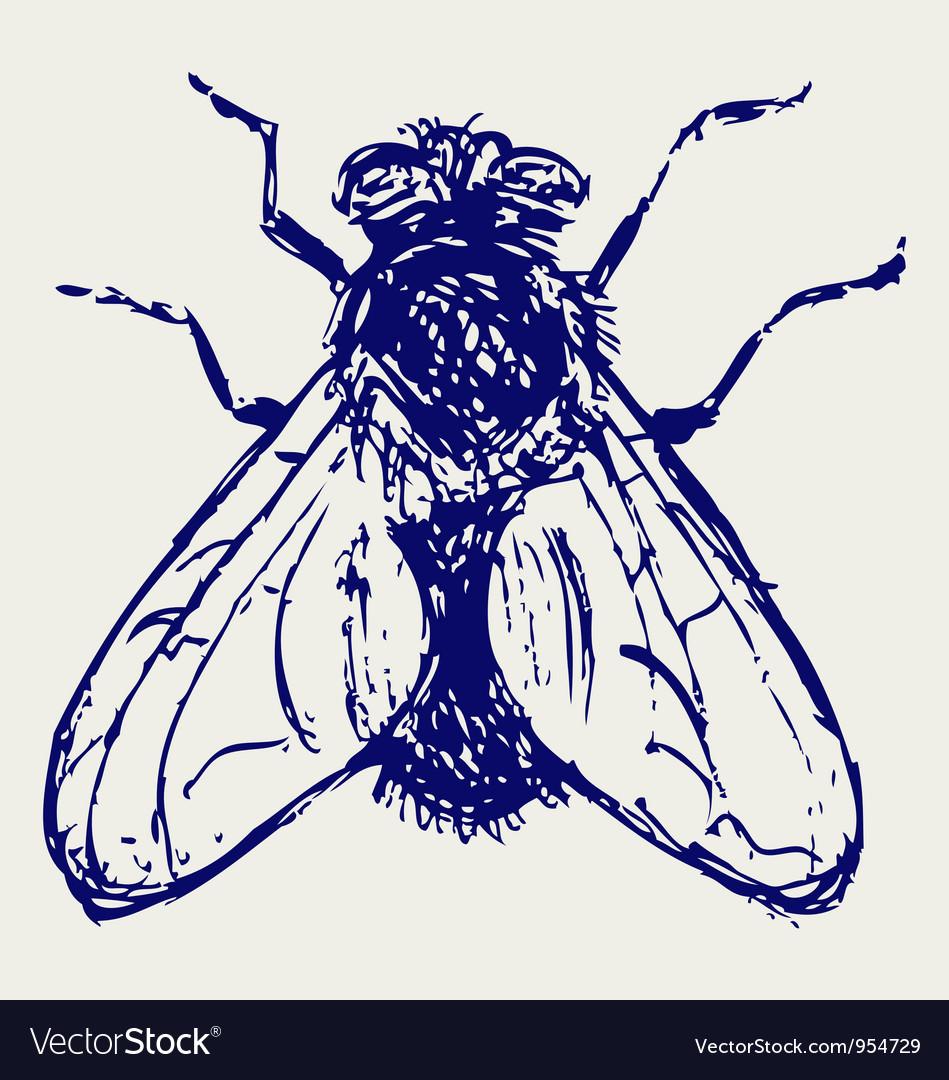 Black flies vector image