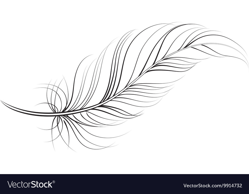 Line Art Feather : Clip art feather royalty free vector image vectorstock
