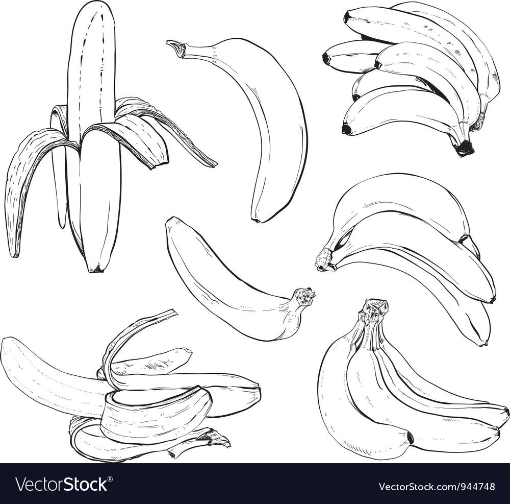 Banana set vector image