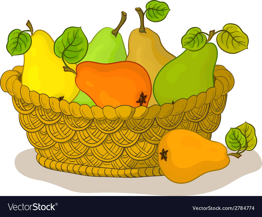 Basket with fruits pears vector image