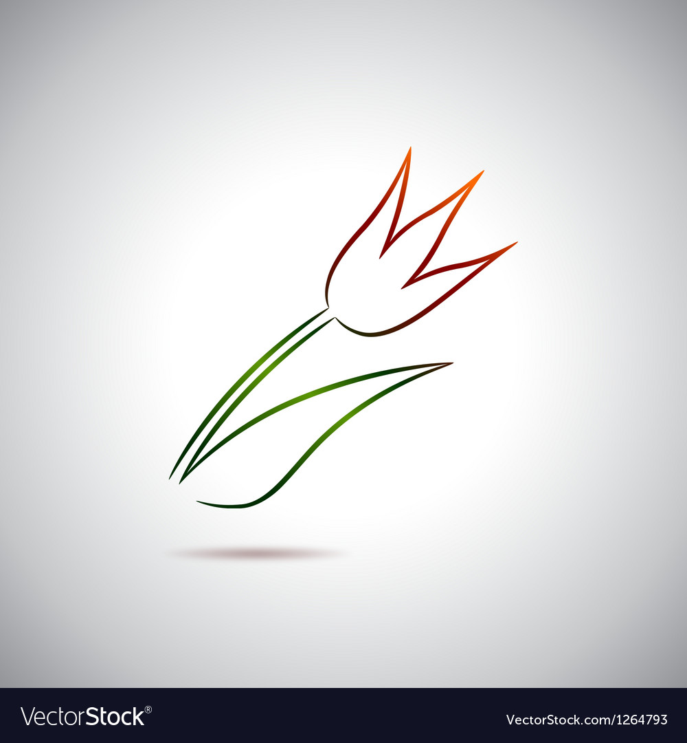 Tulip drawing vector image