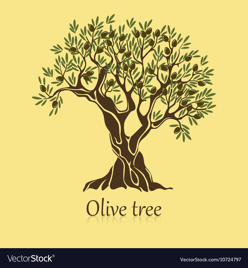 Olive tree with branches and berries logotype vector image