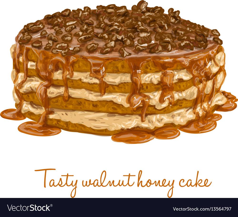 Tasty walnut honey cake vector image