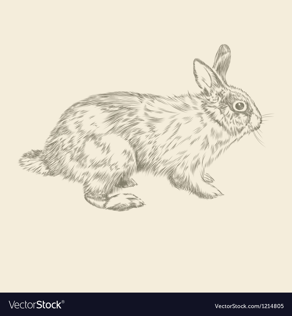 Vintage hand drawing rabbit vector image