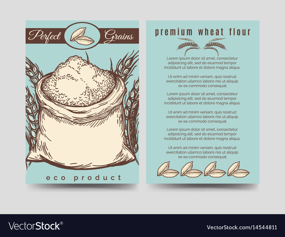 Brochure template of premium mill product vector image