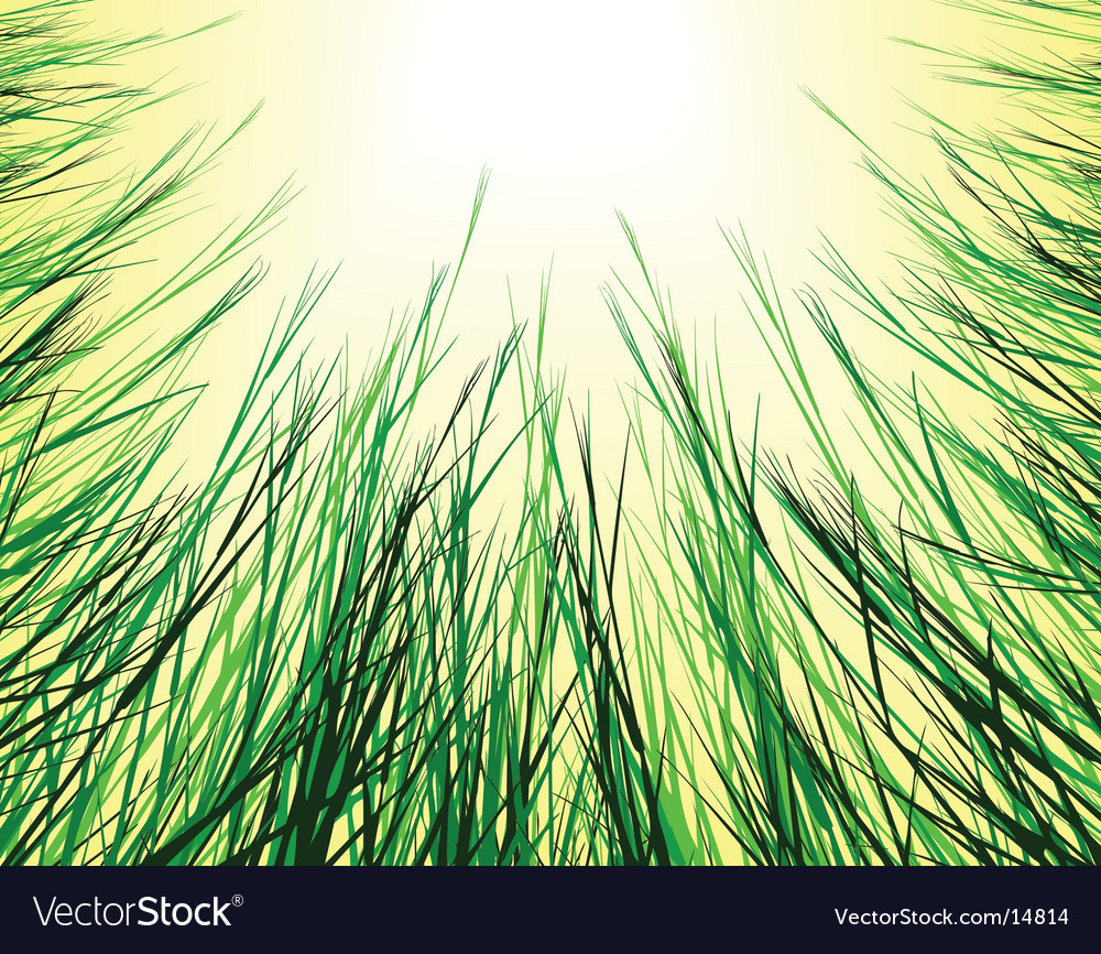 Sungrass vector image