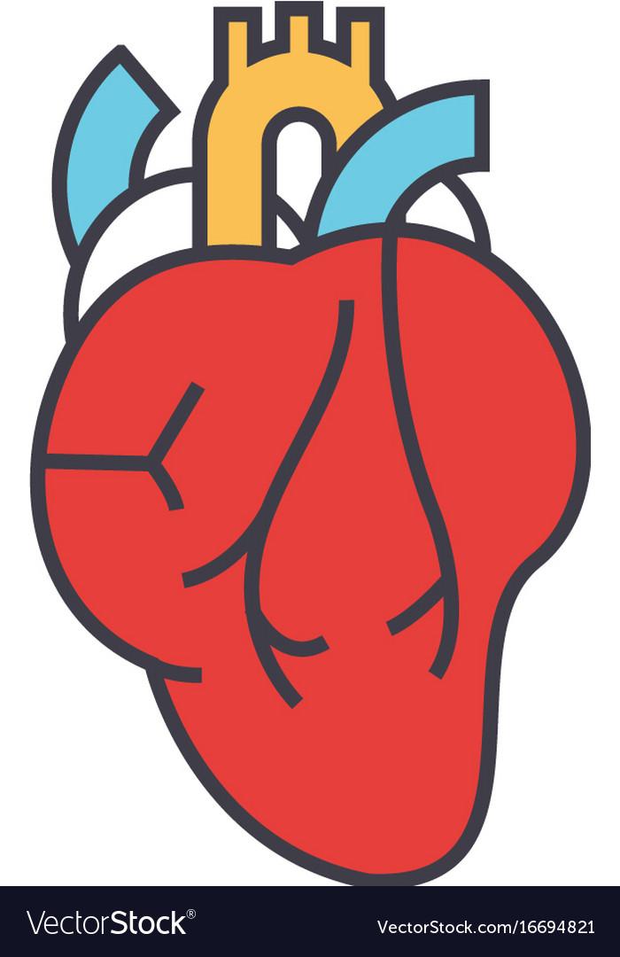 Heart anatomy cardiology concept line vector image