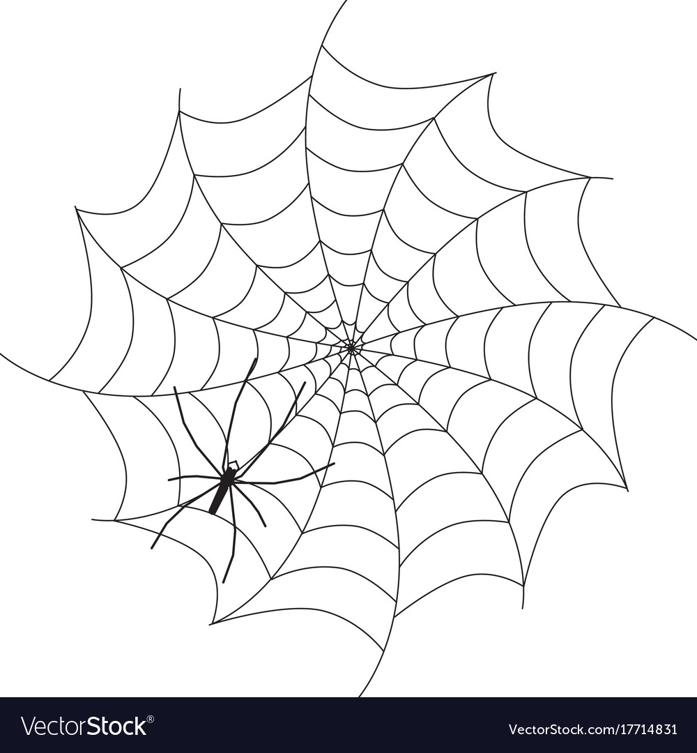 Spider on web black animal silhouette isolated on vector image