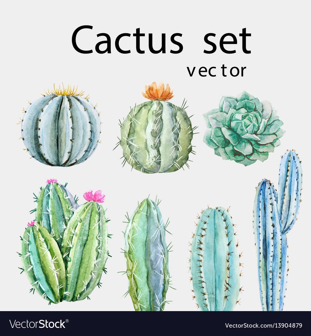 Watercolor cactus set vector image
