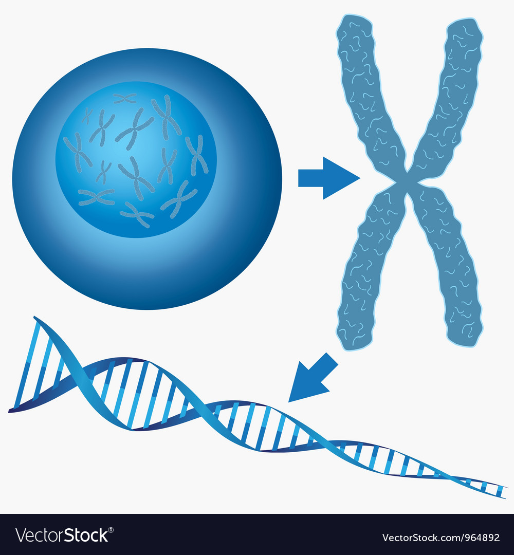 From cell to DNA vector image