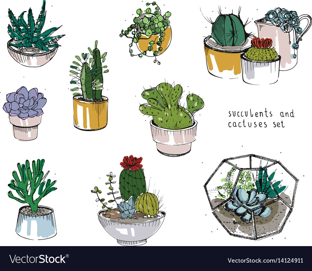Cactus and succulents set collection plants in vector image