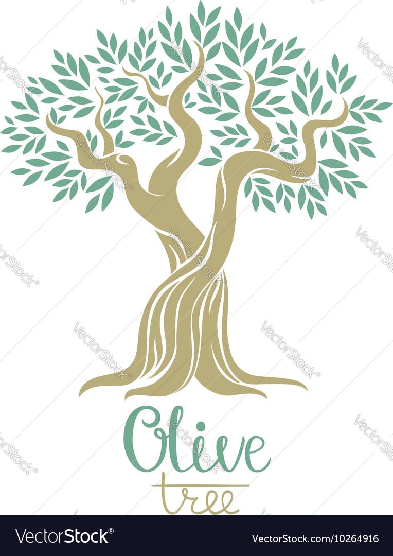 Olive tree Olive oil olive tree for labels pack vector image