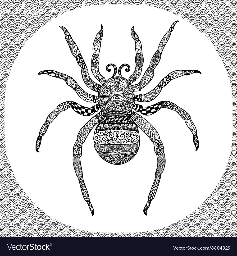 Coloring page of Balck Spider zentangle vector image