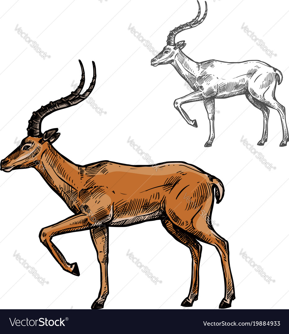 African gazelle or indian antelope animal sketch vector image