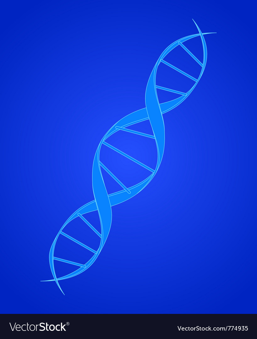 Dna spiral on blue vector image