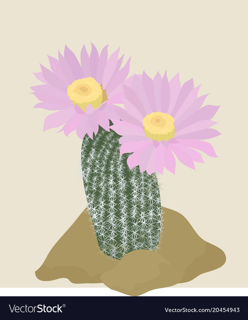 Cactus with pink flowers on the light background vector image mightylinksfo