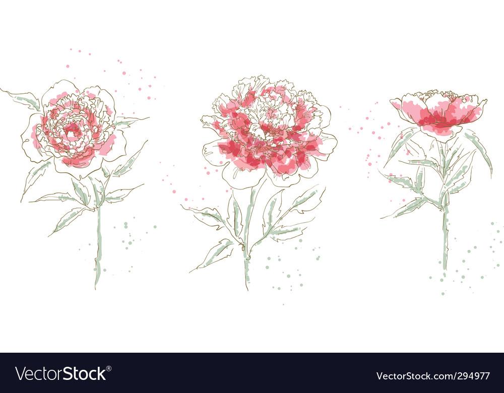 Three drawn peony vector image