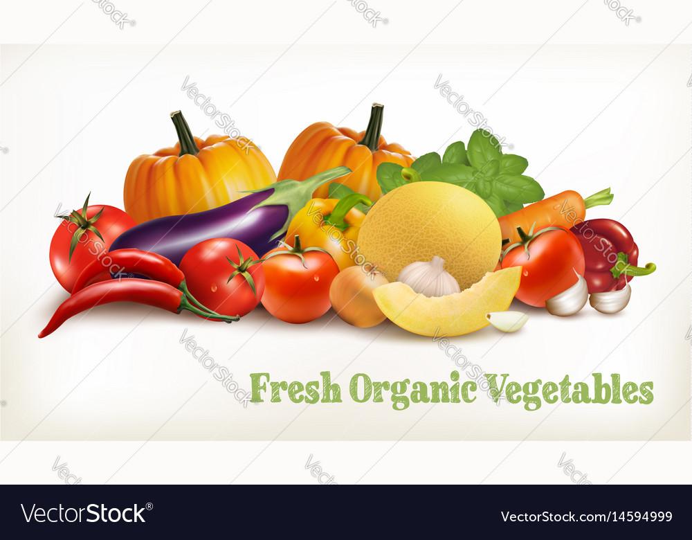 Big set of colorful vegetables vector image