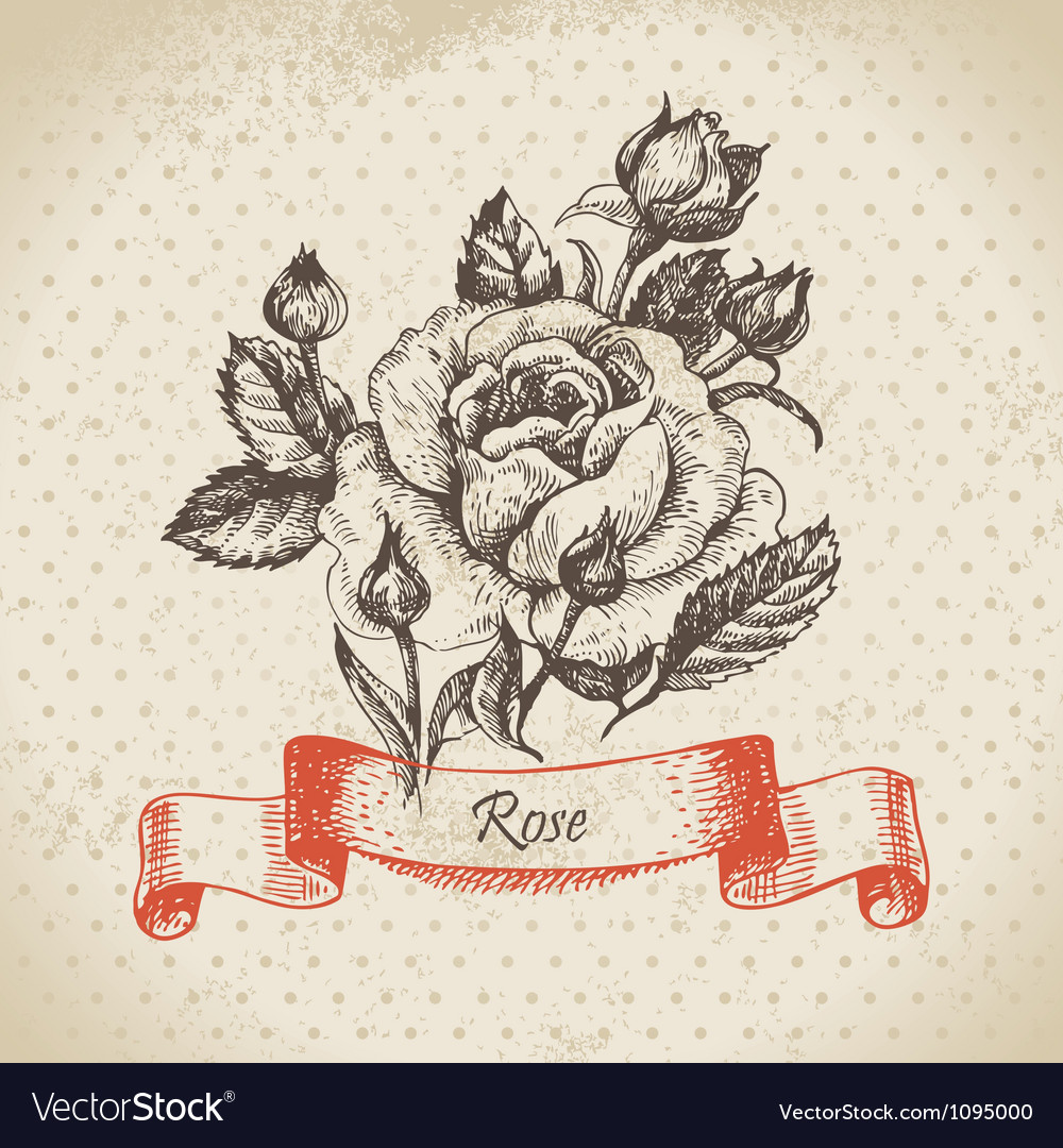 Rose hand drawn vintage design vector image
