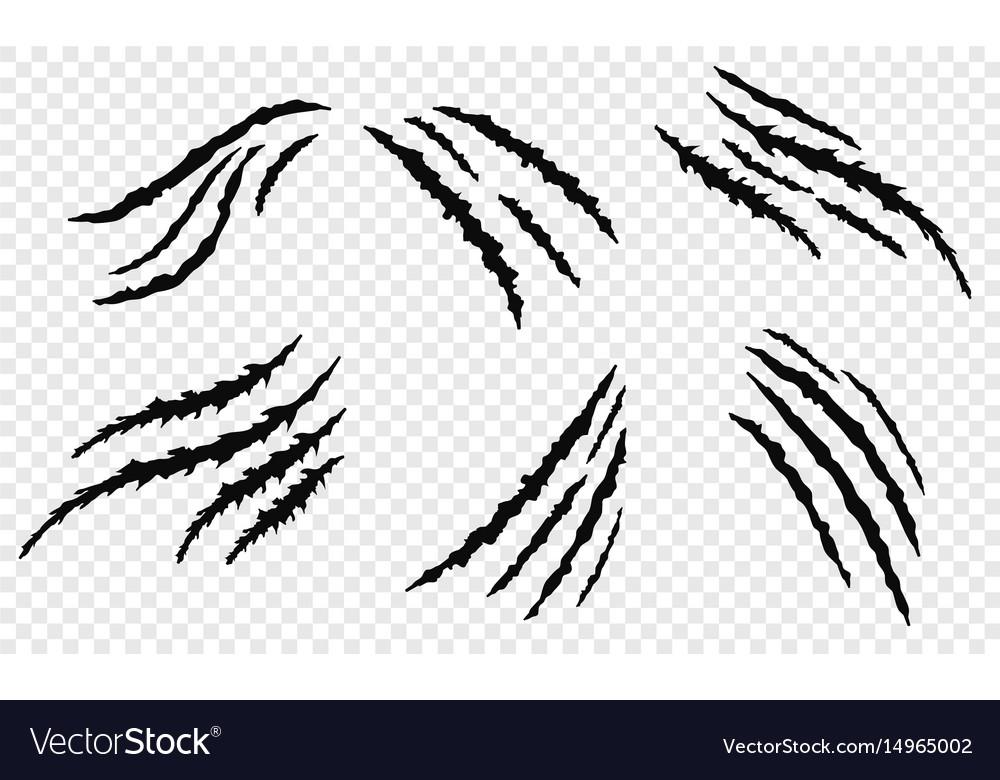 Claw vecror scratches vector image