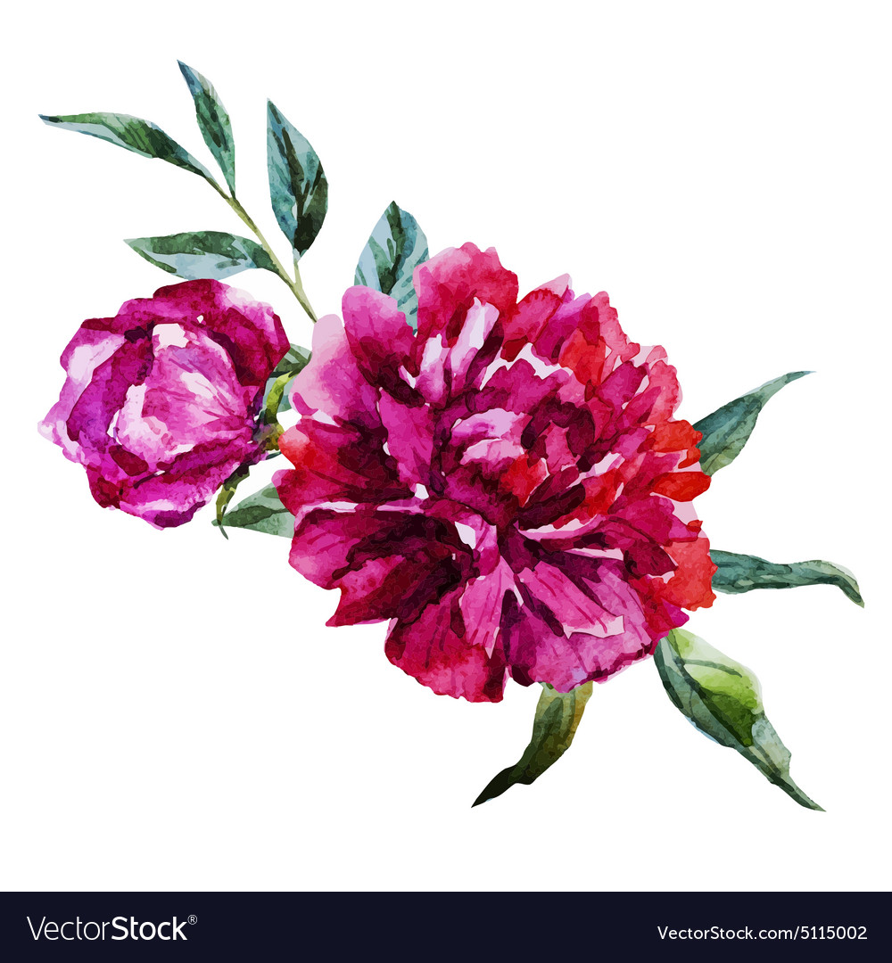 Nice watercolor flowers vector image