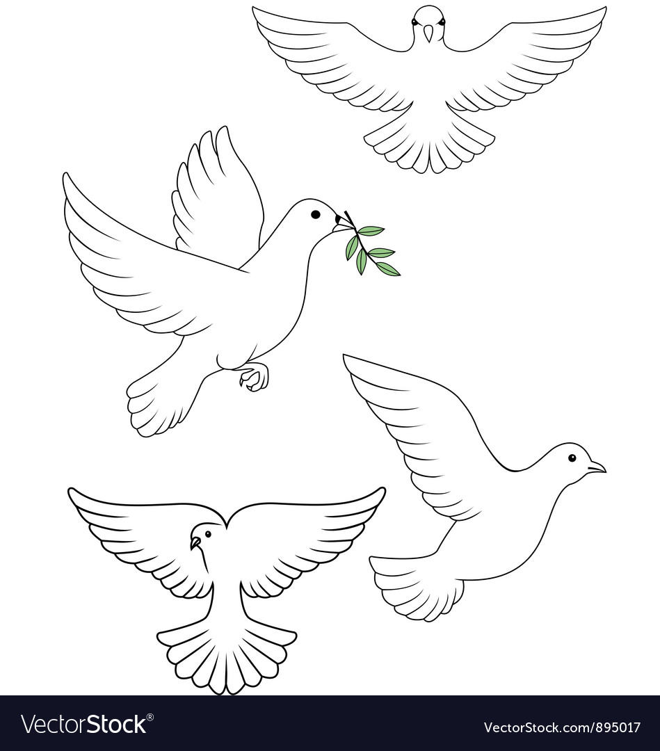 Dove collection vector image