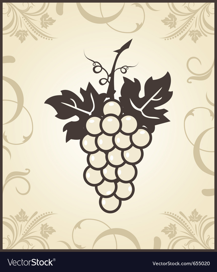 Retro engraving of grapevine - vector image