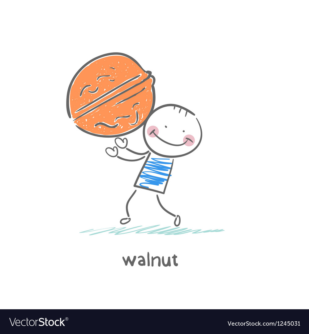 Walnut and people vector image