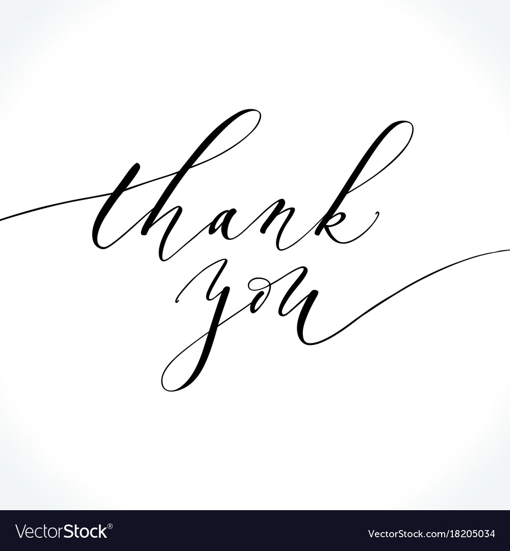 Thank you modern calligraphy royalty free vector image