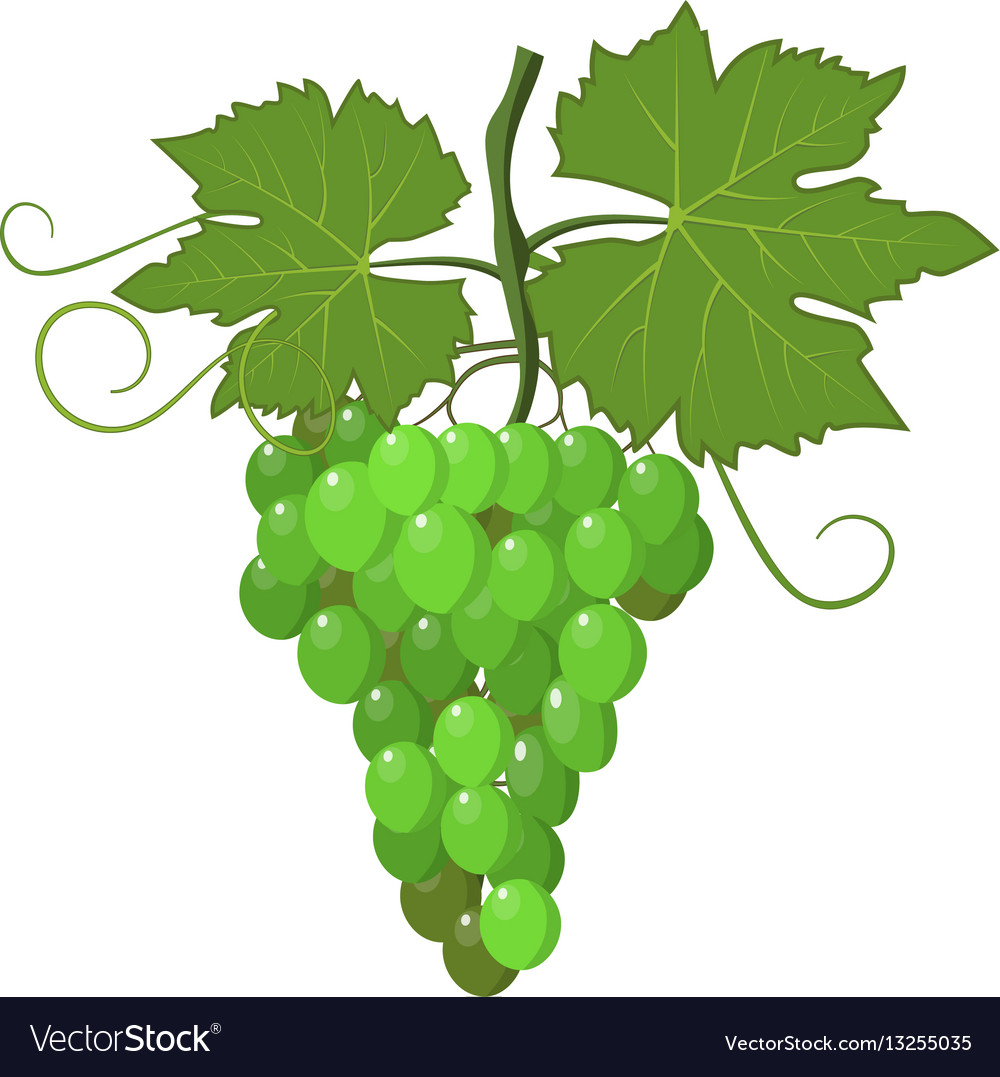 Fresh bunch of grapes purple vector image