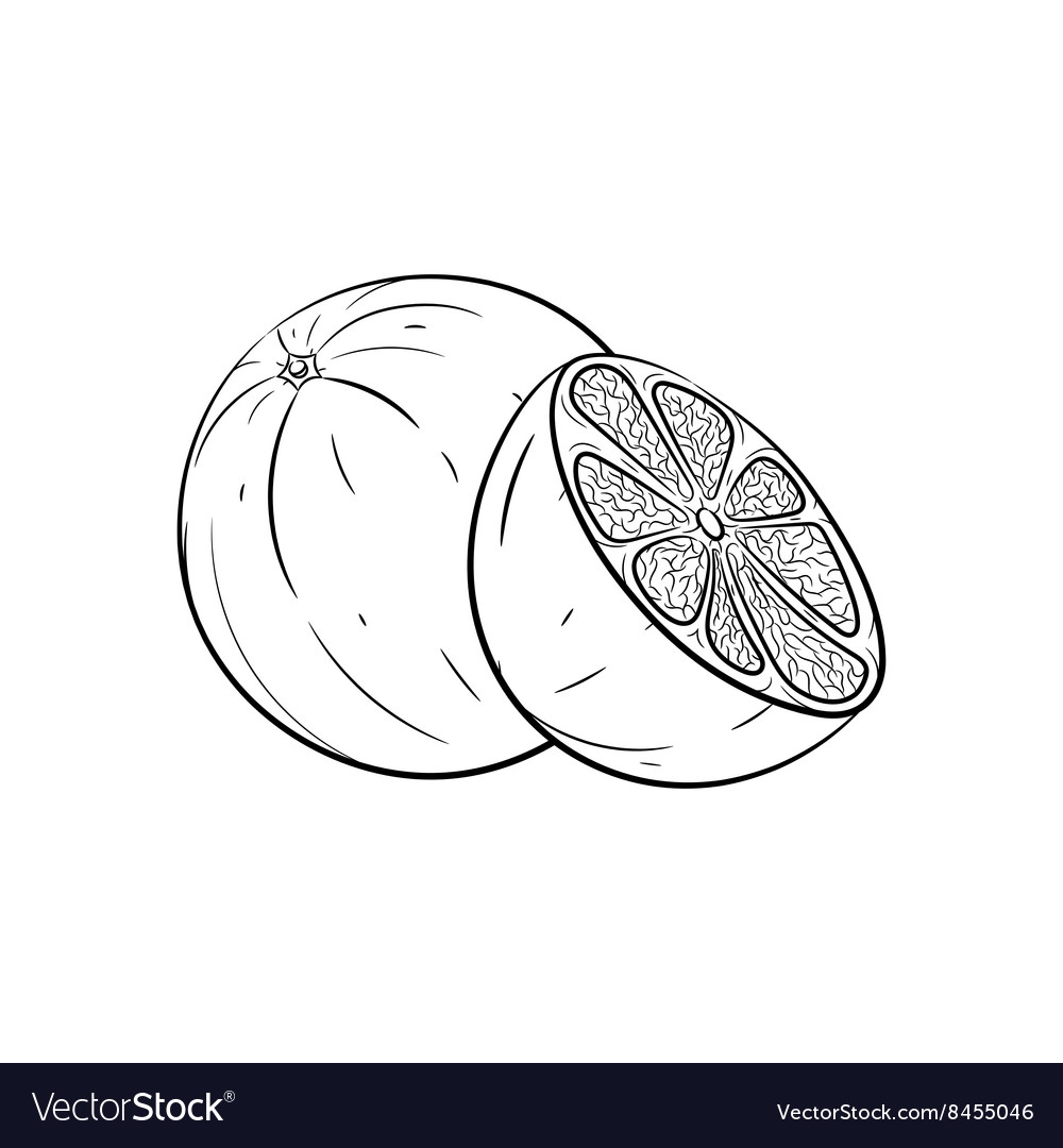Hand drawn orange sketches vector image