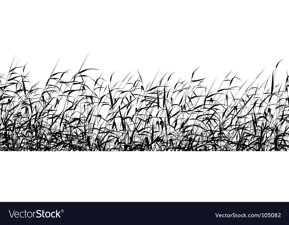 Reed foreground vector image