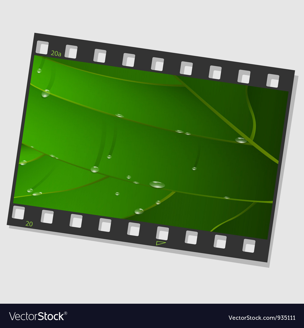 Film frame with green leaf and drops vector image