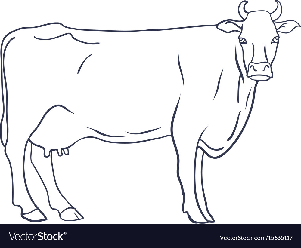 Cow on white background animal farm vector image