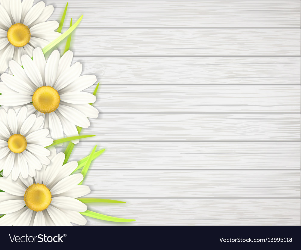 Camomile flowers on wooden desk vector image