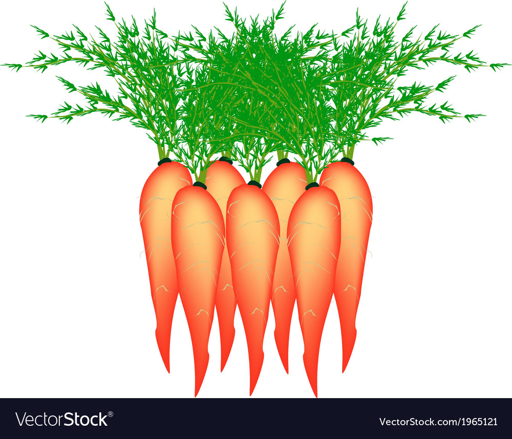 Stack of Delicious Fresh Carrot vector image