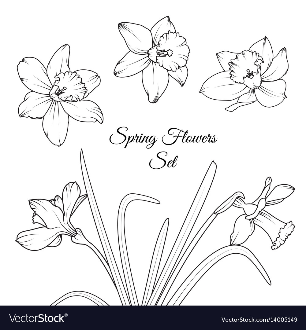 Narcissus spring flowers reusable elements set vector image