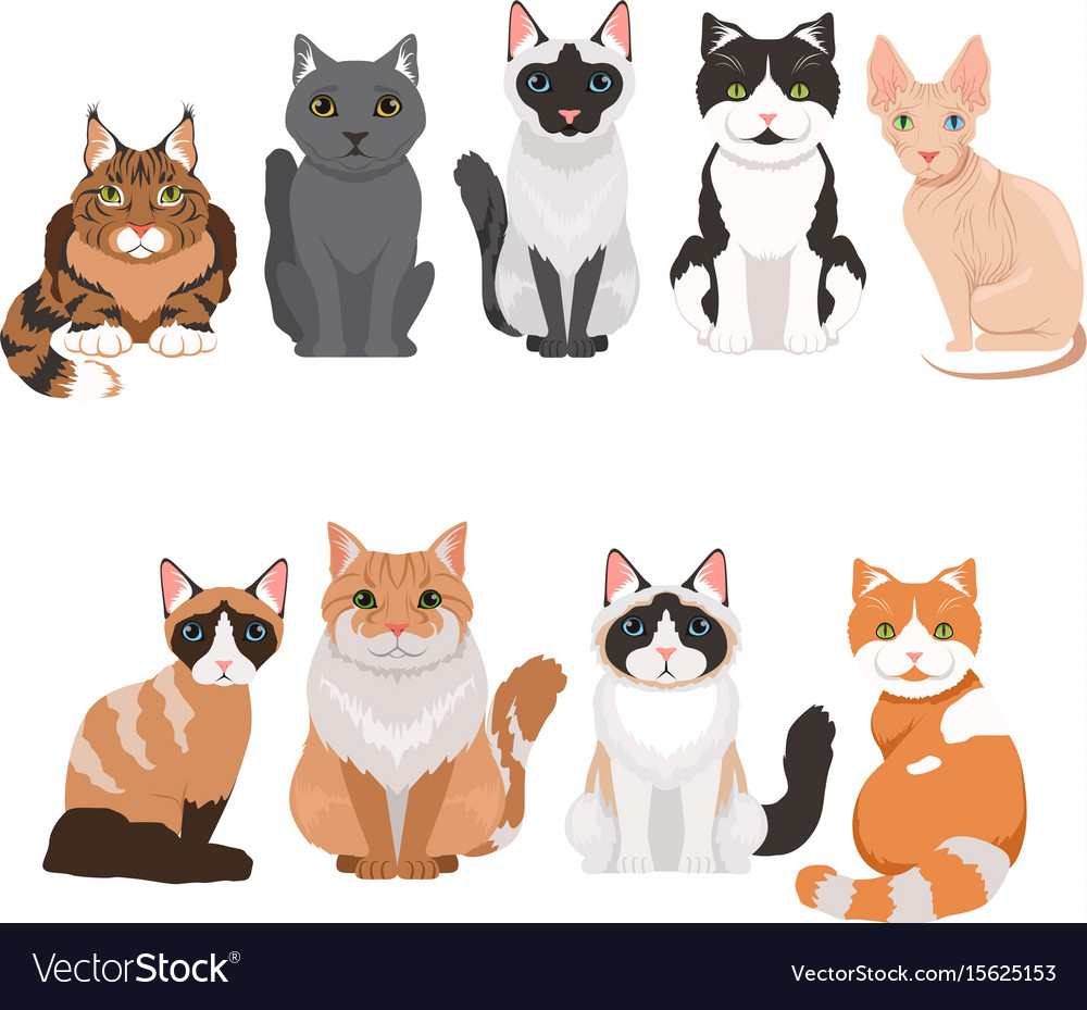 Domestic cats in cartoon style vector image