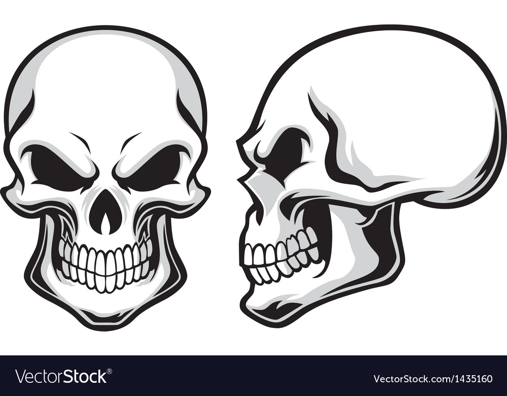 Cartoon skulls vector image