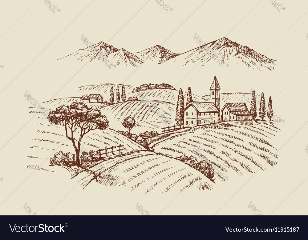 Wineyard vector image