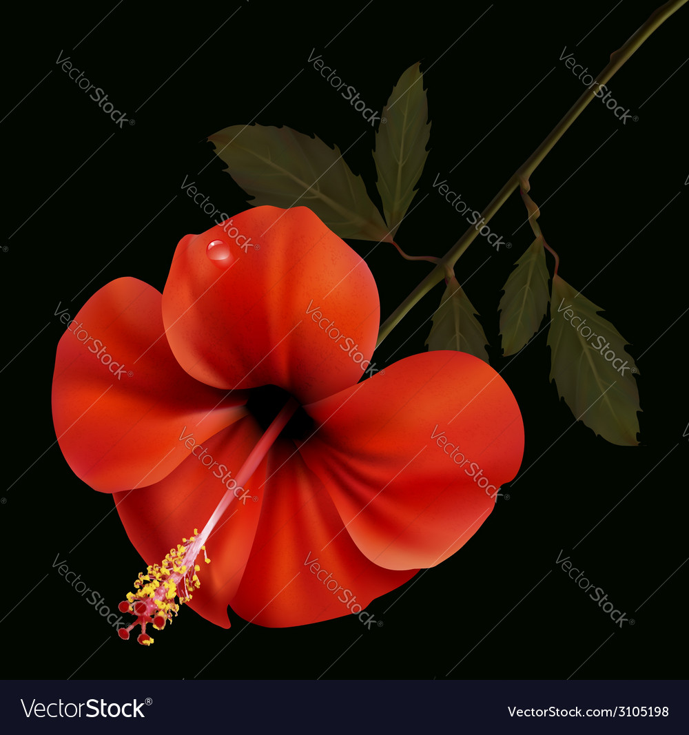 Beautiful red flower on a black background vector image
