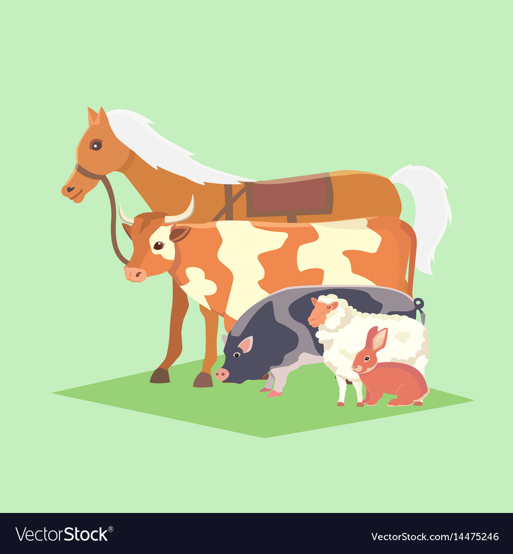 Set of popular colorful farm animals pet vector image