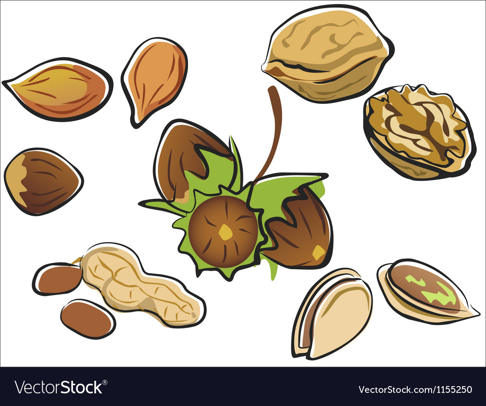 Nuts collection in cartoon style isolated vector image
