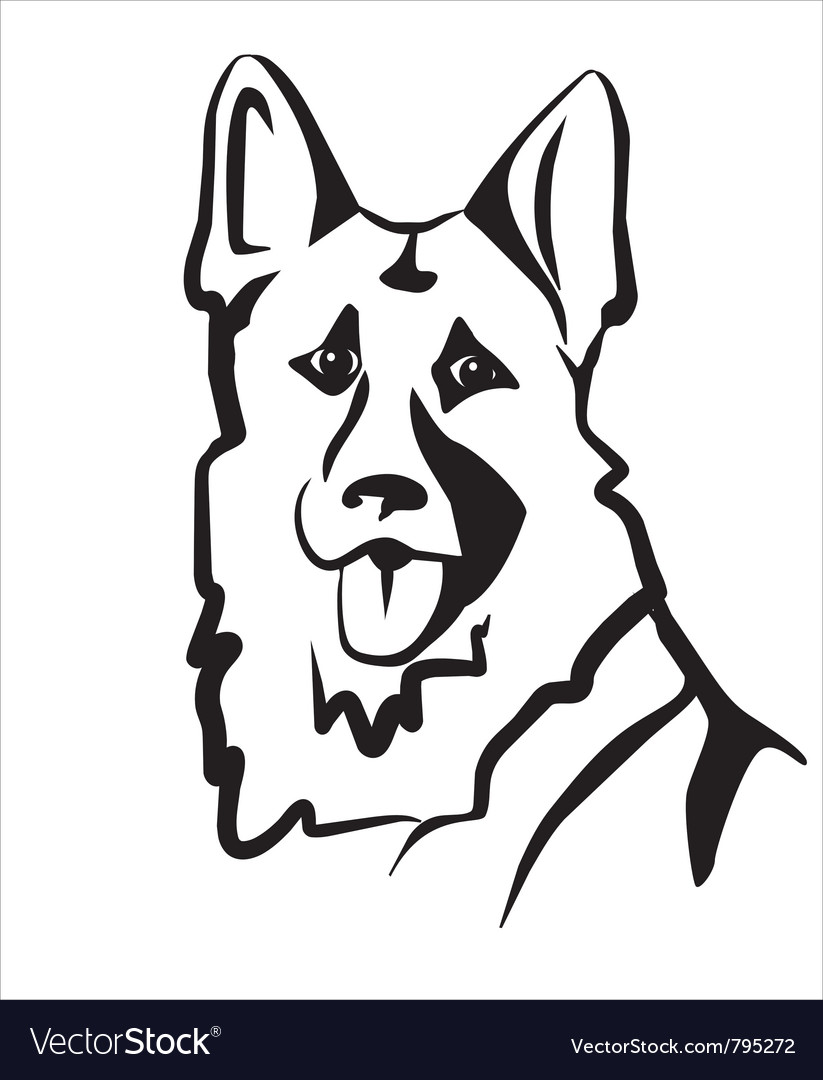German shepard vector image